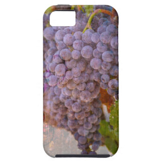 Wine Country iPhone 5/5s case