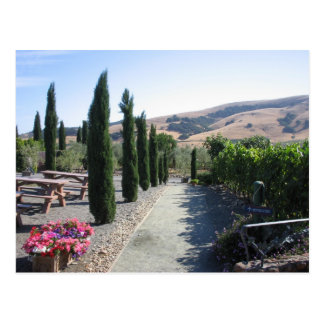Wine Country Postcard