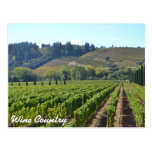 Wine Country Vintards Postcard