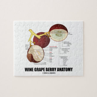 Wine Grape Berry Anatomy Scientific Diagram Puzzle