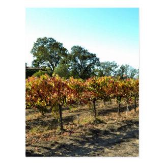 Wine Grapes in Mendocino County, California Post Card