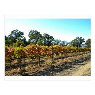 Wine Grapes in Mendocino County, California Postcard