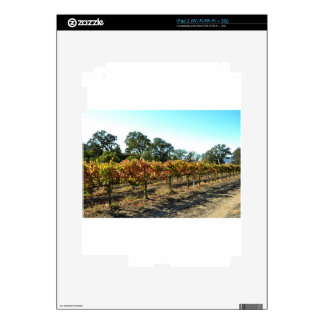 Wine Grapes in Mendocino County, California iPad 2 Decal