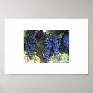 Wine Grapes Print