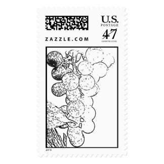Wine Grapes Stamp