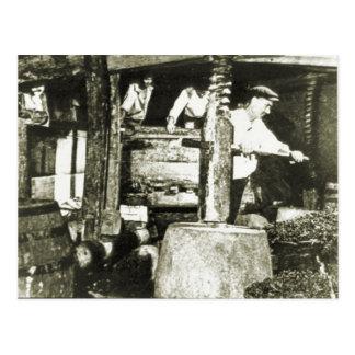 Wine making 1900 post card