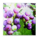Wine on a Vine ~ FreshProduce Ensemble Tiles