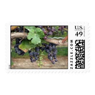 Wine on the Vine Postage Stamp