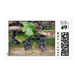 Wine on the Vine Stamps