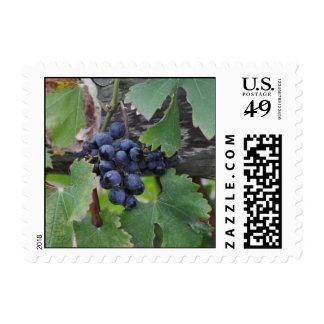 Wine Stamp