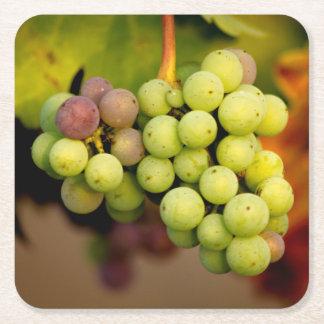 Winery Grape Coaster