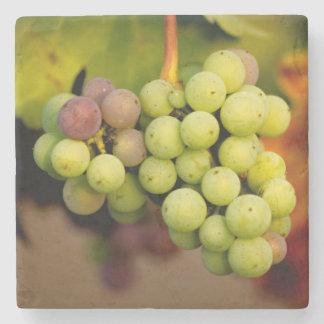 Winery Grape Stone Coaster