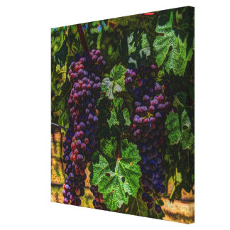 Winery Grapevine sunny tuscany vineyard grapes Canvas Print