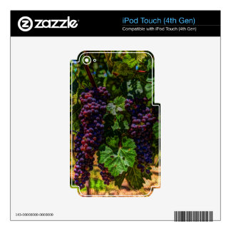Winery Grapevine sunny tuscany vineyard grapes Decal For iPod Touch 4G