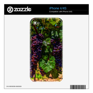 Winery Grapevine sunny tuscany vineyard grapes Decals For iPhone 4