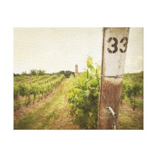 Winery Vines canvas print