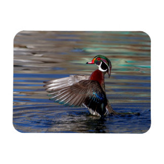 Wing Flapping Wood Duck Rectangular Photo Magnet
