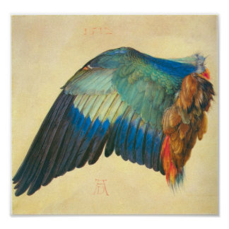 Wing of a Blaurake by Albrecht Durer Posters