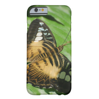 Winged Butterfly Barely There iPhone 6 Case