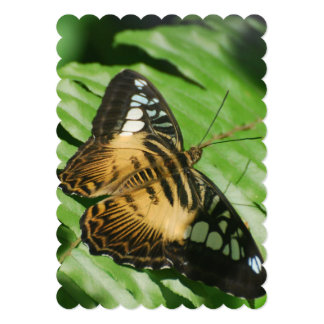 Winged Butterfly Card