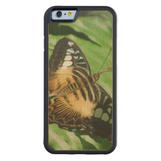 Winged Butterfly Carved Maple iPhone 6 Bumper Case