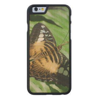Winged Butterfly Carved Maple iPhone 6 Case