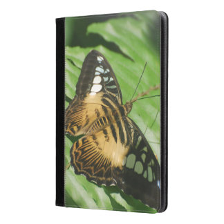 Winged Butterfly iPad Air Case
