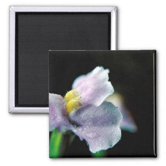 Winged Monkey Flower 2 Inch Square Magnet