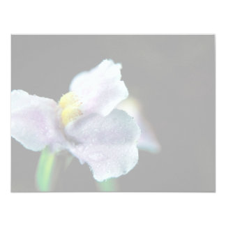 Winged Monkey Flower 4.25x5.5 Paper Invitation Card