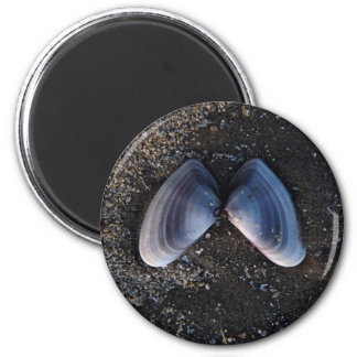 Winged Shell 2 Inch Round Magnet