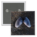 Winged Shell 2 Inch Square Button
