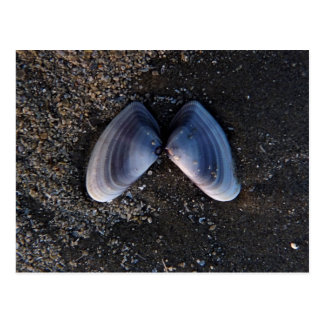 Winged Shell Postcard