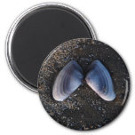 Winged Shell Refrigerator Magnet