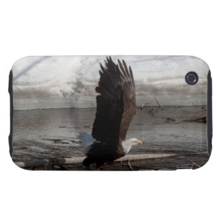 Wings Extended Bald Eagle iPhone 3 Tough Covers