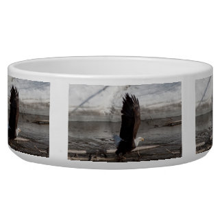 Wings Extended Bald Eagle Dog Bowl