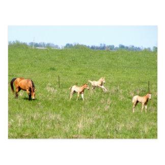 Wings of May: Horses Post Card