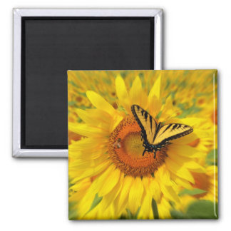 Wings of summer, magnets