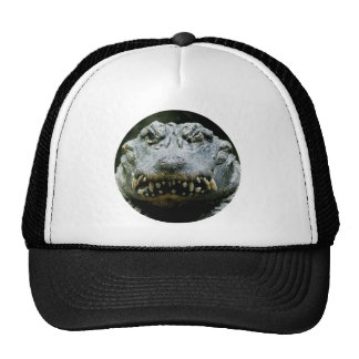Wink and a Smile (Chinese Alligator) Hats