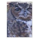 Winking Great Horned Owl note card