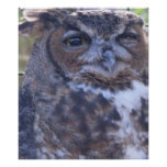 Winking Great Horned Owl Poster