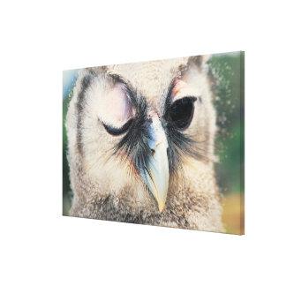 Winking Owl Canvas Print