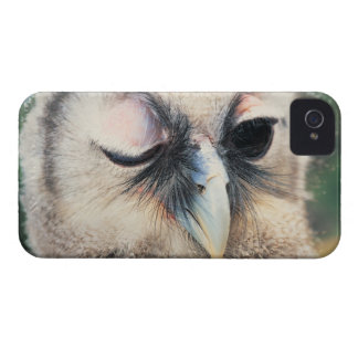 Winking Owl iPhone 4 Cases