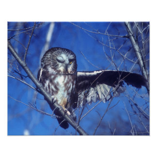 Winking owl poster