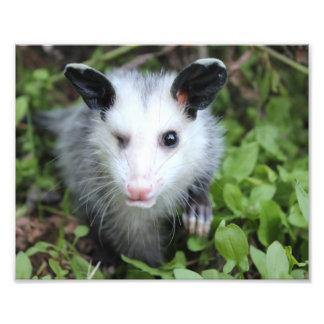 Winking possum print. photo print