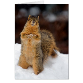 Winking Squirrel Card