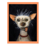 Winner of the Ugly Dog Contest 2011 Postcard