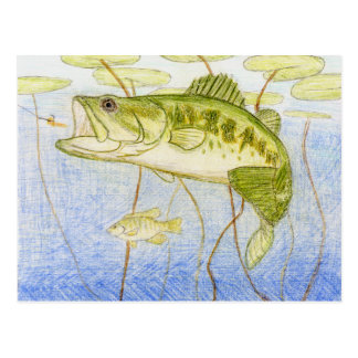 Winning Art By N. Rowe Grade 4 Postcard