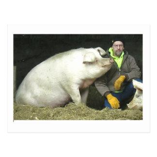 Winston el cerdo tarjeta postal