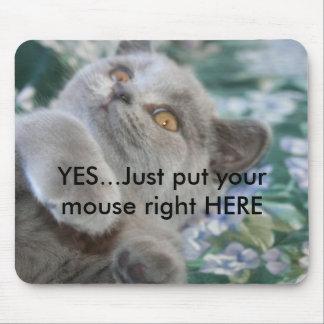 Winston el gato Mousepad Tapete De Ratón