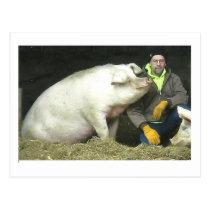 Winston the pig postcard